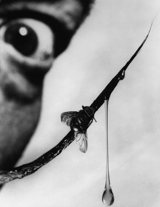 dali and the bee