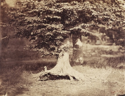 gustave-le-gray-the-beech-tree-ca-1855-1857